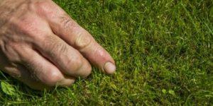 Sådan slipper du af med mos i græsplænen