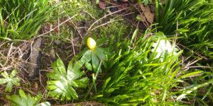 Den ultimative lyd af forår