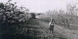 Æbleplantagen i september
