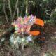Livsbekræftende børnekunst i efterårsskoven