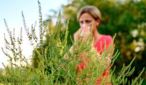 Få faglig hjælp til at komme igennem allergisæsonen