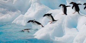 Spring ud og bliv skribent på PingvinNyt