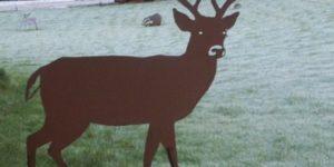 Se dyrene i smedens have i Hadsten