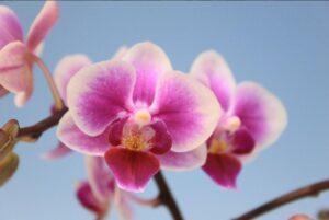 Orkide-gartneri i Rønbæk!