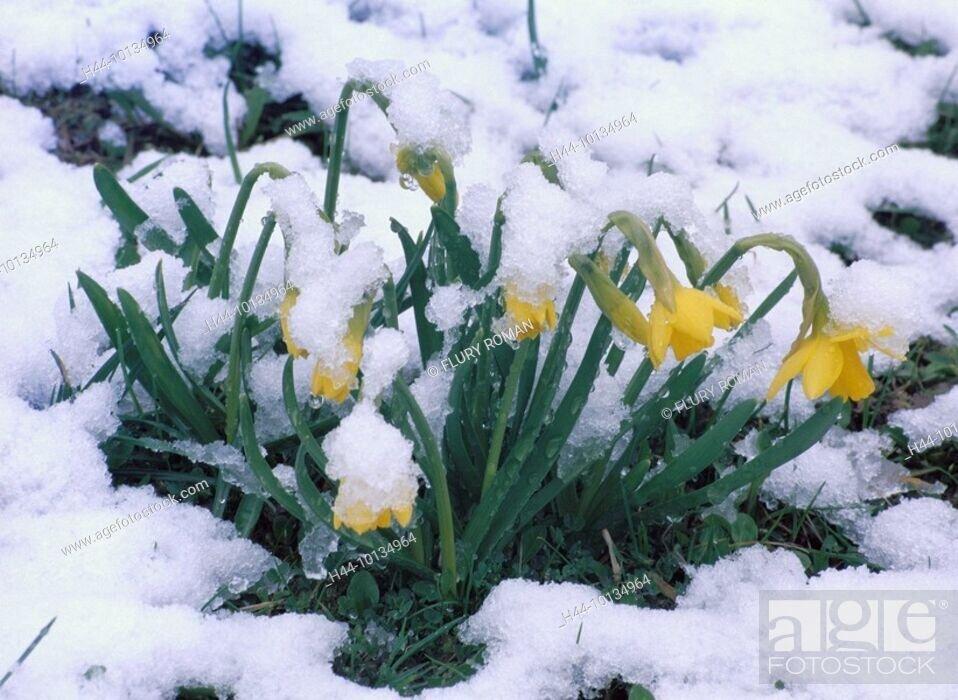 Så kom sneen til Hadsten- et kønt syn