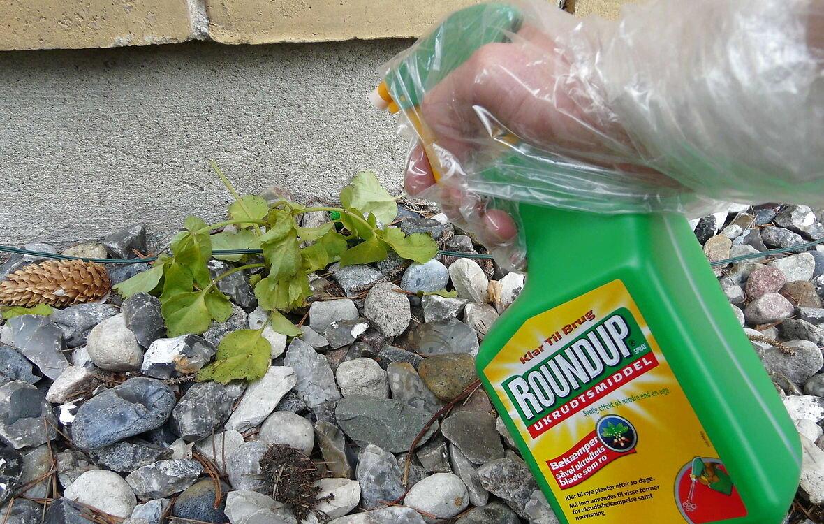 Slut med at bruge Roundup i indkørsler og på terrasser